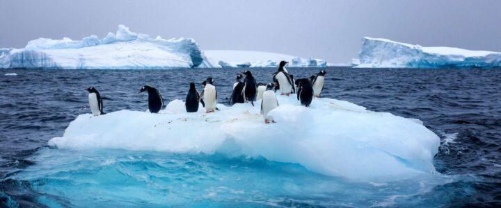 Notre projet Antarctique